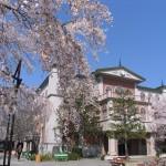 東映太秦映画村で恒例の「映画村さくらまつり」を開催