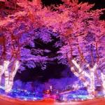 さがみ湖リゾート、花と光の共演「夜桜イルミネーション」を開催