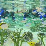鴨川シーワールドに、水族館の水槽で水中散歩が楽しめる特別プランが登場
